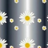 Daisy Film
