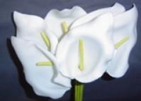Calla Lily - Medium - White