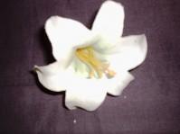 Harissi - White
