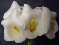 Calla Lily - Mini - White