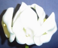 Calla Lily - Large - White