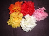 Carnation Pick - Assorted