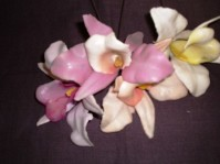 Orchid - Assorted