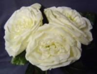 Foam Rose - Country Garden - Cream